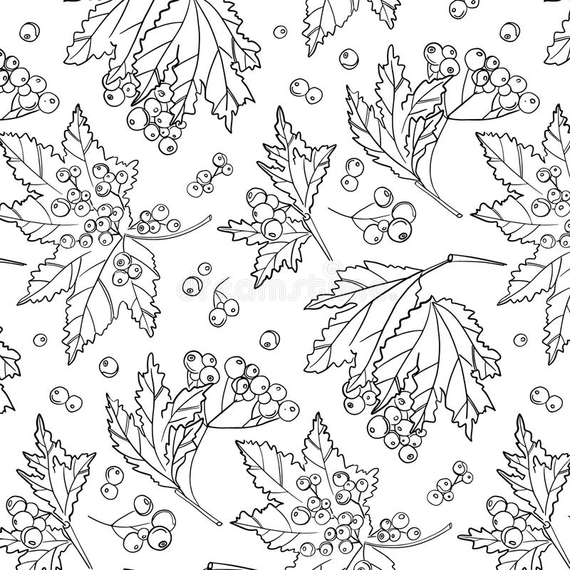 Rowan berry pattern. Autumn white black cover decoration. Wildflower plant with leaves and berries. botanical isolated wrap. Rowan berry pattern. Autumn white royalty free illustration