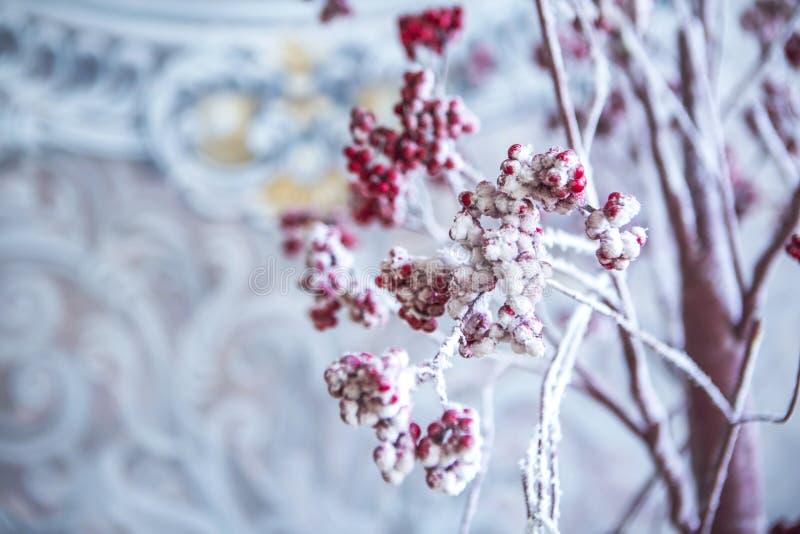 Rowan drzewo z czerwonymi jagodami w śniegu obrazy stock