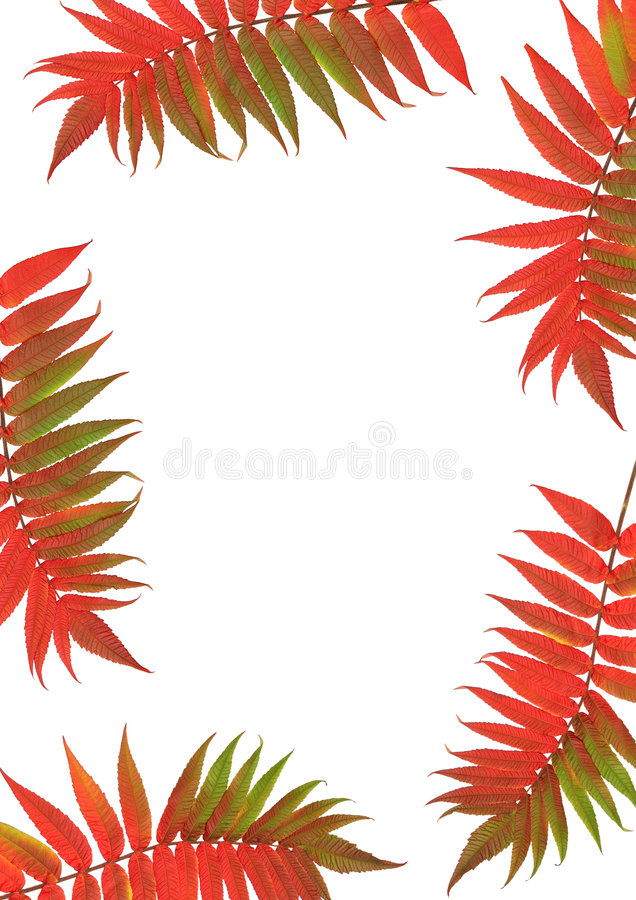Free Rowan Leaf Beauties Stock Photos - 4479563