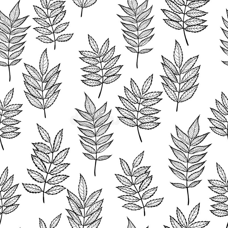 Rowan leaves. Hand drawn Vector seamless pattern. Rowan leaves. Vector seamless pattern. Hand drawn. For covers, printing on fabric, wedding or celebration stock illustration