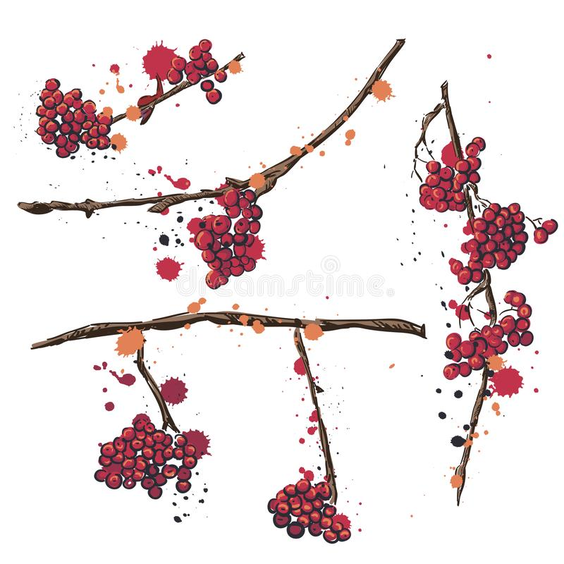 rowan Stellen Sie von den Vektorhandgezogenen Elementen ein Ebereschenniederlassung mit Beeren Stellen Sie von den Zeichnungen fü vektor abbildung
