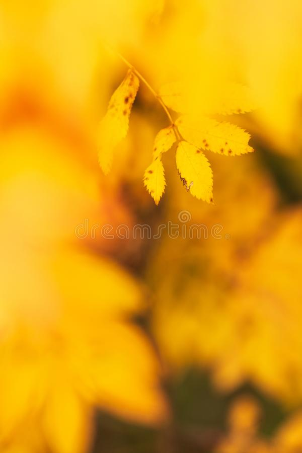 Tree leaves in autumn colors royalty free stock photos