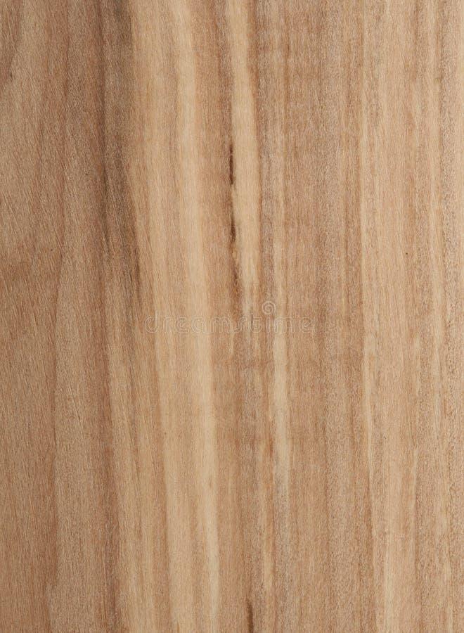 Rowan tree texture royalty free stock image