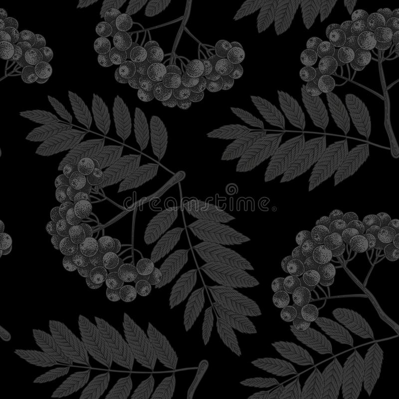 Rowan. Vector seamless pattern in vintage style. Black background. vector illustration
