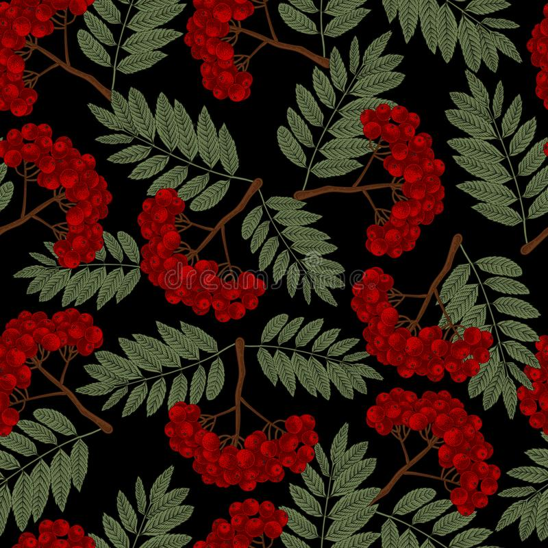 Rowan. Vector seamless pattern in vintage style. royalty free illustration