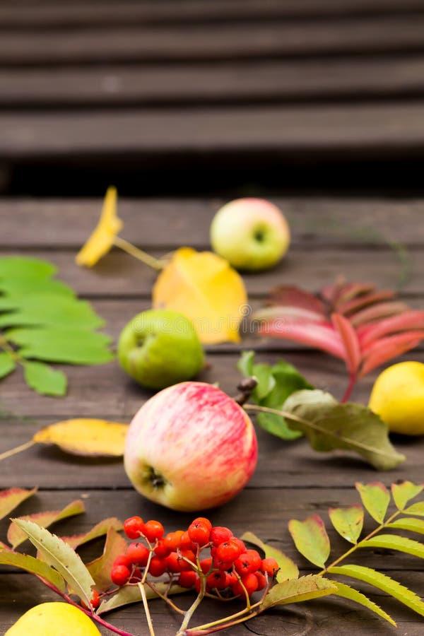 Rowan vermelho maduro frutifica, as maçãs, peras com folhas de outono imagem de stock