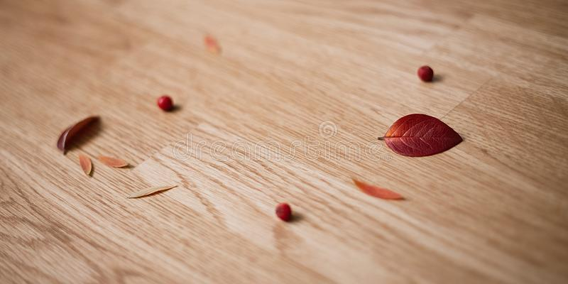 Rowan on wooden background Frame made of autumn dried leaves royalty free illustration