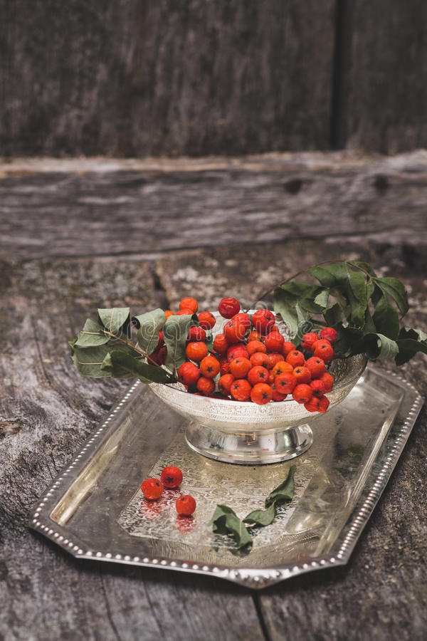 Rowanberry on wooden background royalty free stock image
