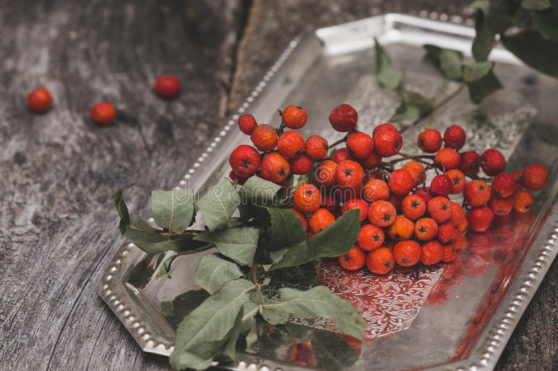 Rowanberry on wooden background stock photos