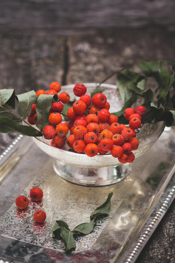 Rowanberry on wooden background royalty free stock photos