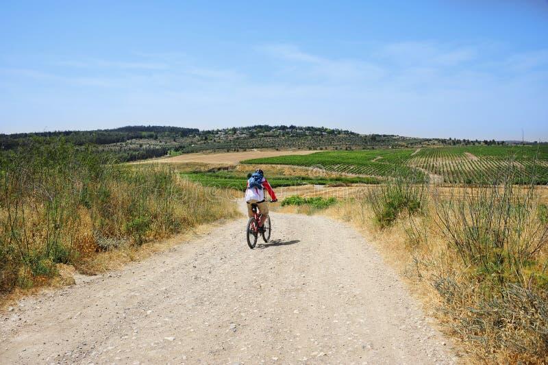 Rower górski wycieczka przez poly i winniców zdjęcie stock