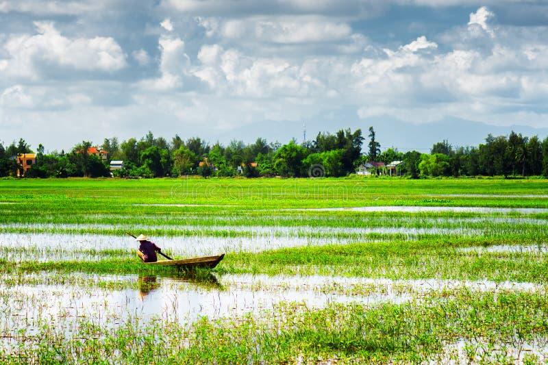 Rower jest ubranym Wietnamskiego conical kapelusz wśród zielonych ryżowych poly fotografia stock