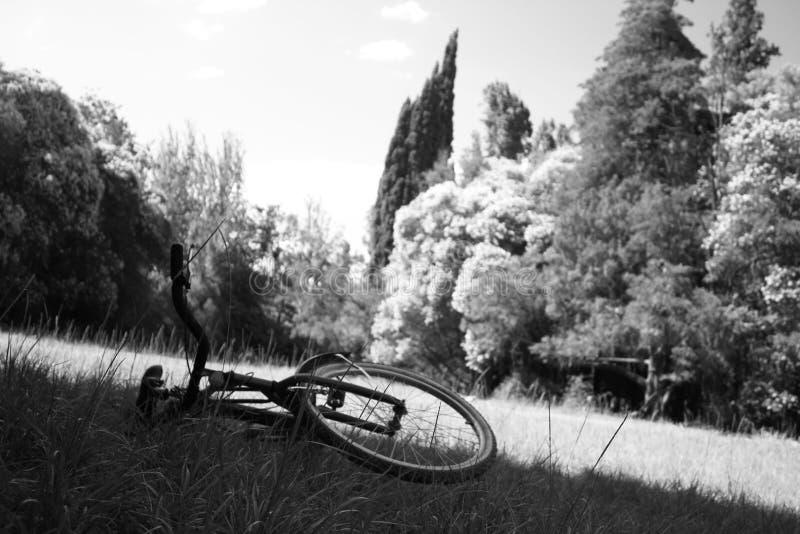 Rower w ogródzie zdjęcia royalty free