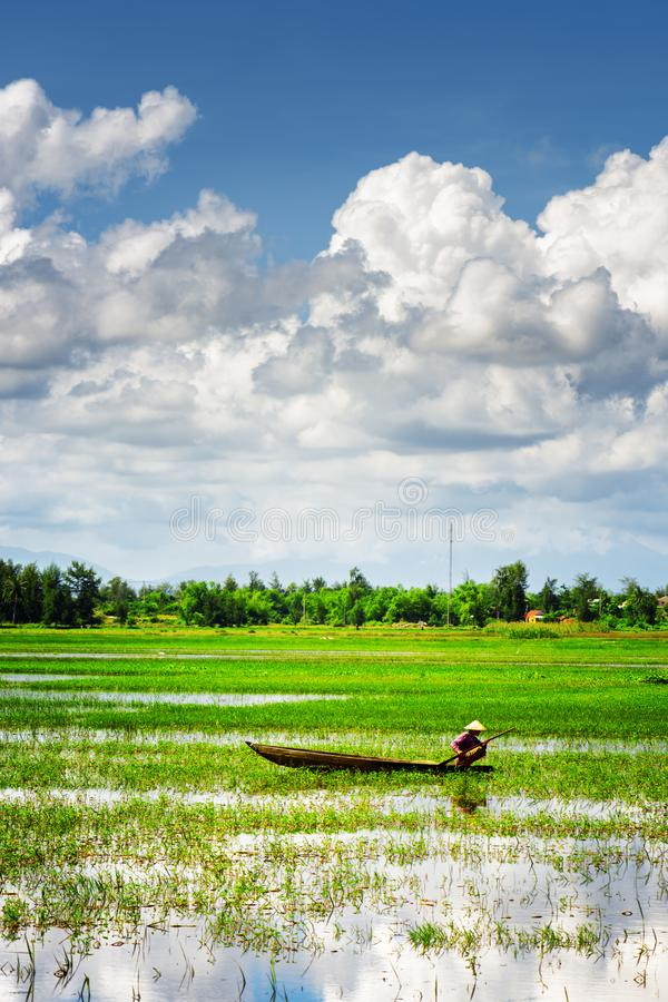 Rower wearing Vietnamese hat on wooden boat among rice fields royalty free stock photography