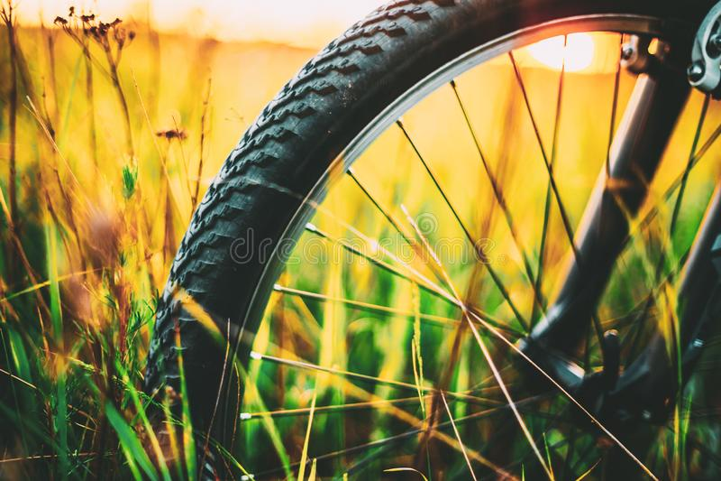 Rowerowy Toczy Wewnątrz lato Zielonej trawy łąki pole obraz stock