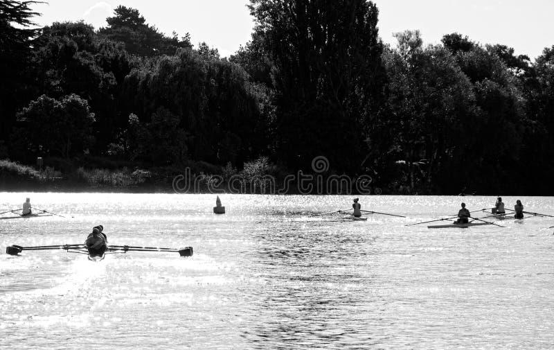 Rowers на реке Exe на утре лета стоковые фото