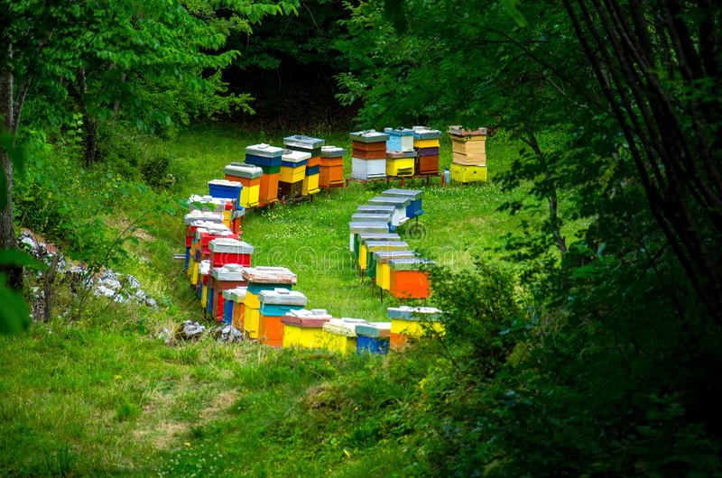 Rows of colourful wooden bee hives in forest meadow clearing stock photos