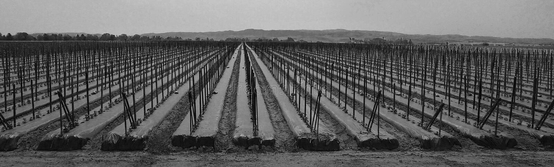 Rows at the farm stock photos