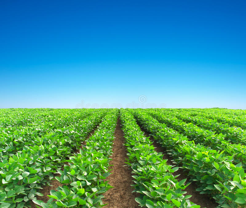 Rows on field royalty free stock image