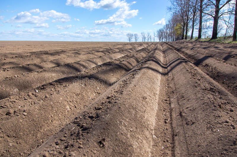 Rows on the field. Large brown field with numerous straight rows stock image