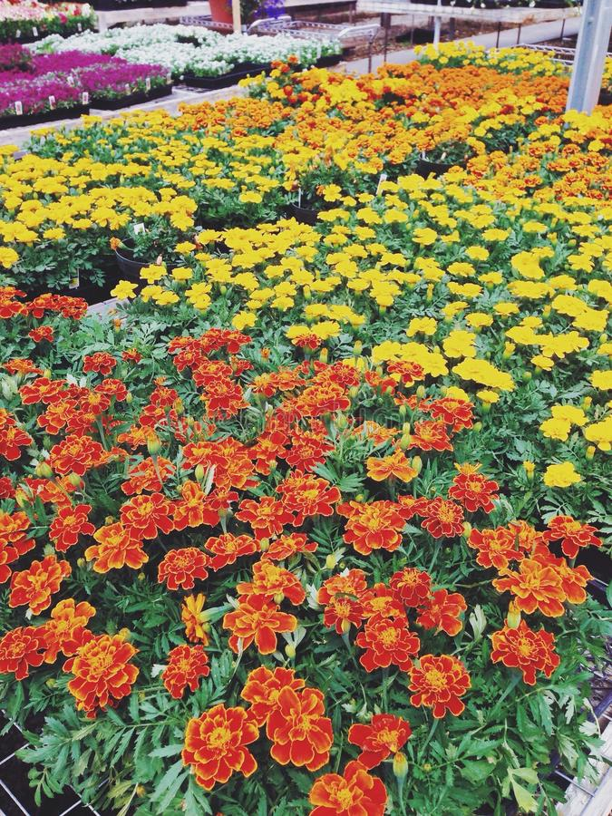 Rows of flowers stock images