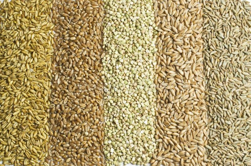 Download Rows of grain stock photo. Image of ripe, time, seasonal - 23902118