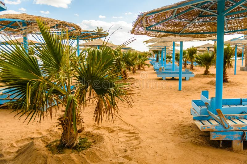 Rows of green palm trees on beach of the Red sea. Rows of green palm trees on beach of Red sea stock photography