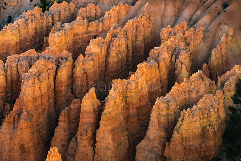 Rows of hoodoos in morning sunshine. The rows of hoodoos in morning sunshine at Bryce Canyon National Park royalty free stock image