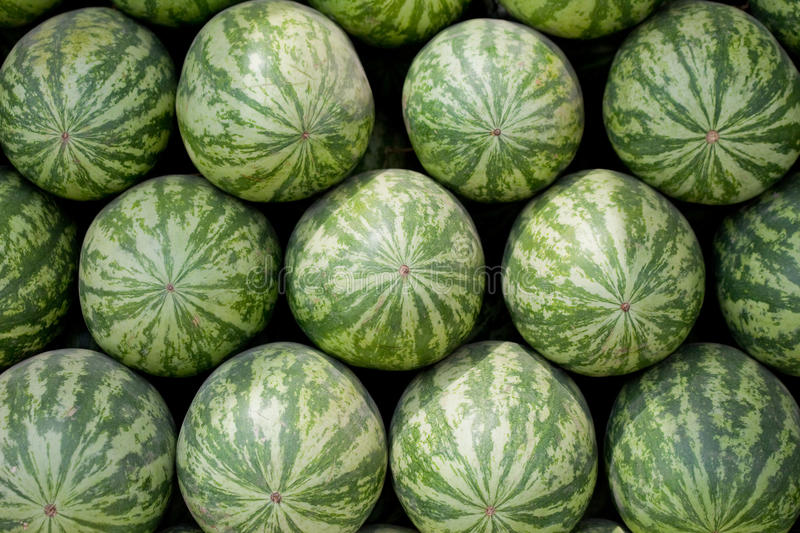Rows Of Large Watermelon On Sale Stock Image