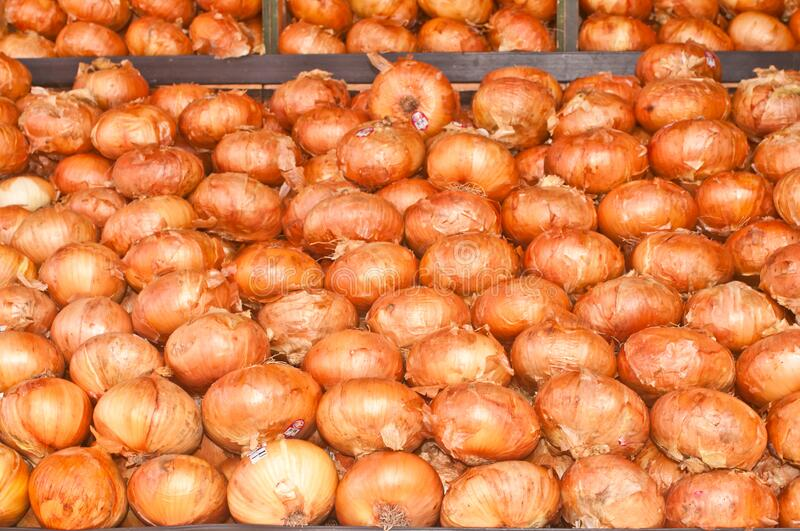 Rows of local, ripe, vadalia onions, on display and for sale stock image