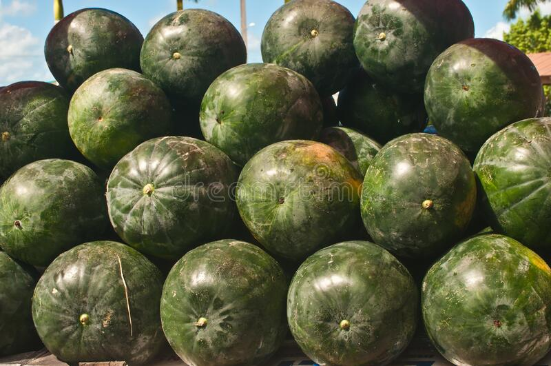 Rows of local, ripe, watermelons, on display and for sale at a tropical farmers market stock photo