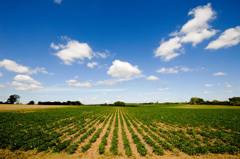 Download Rows Of Plants Stock Photo - Image: 13372090