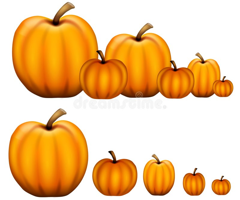 Rows Of Pumpkins Stock Photo