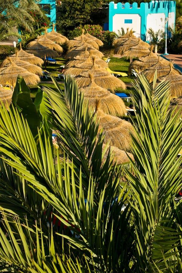 Rows of sunshades