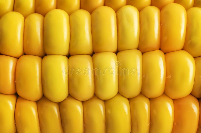 Rows of sweet corn grains background. Close up of yellow succulent corn ear. Corncob texture. Glancing of maize grains stock photography