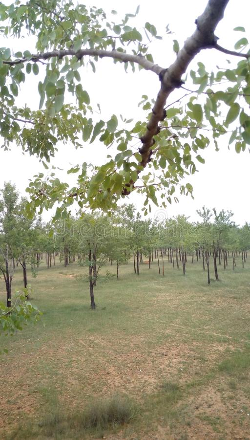 rows trees royaltyfria bilder