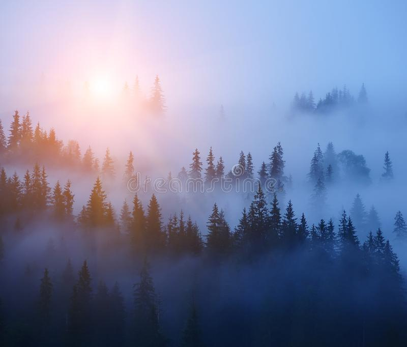 Rows of trees in the fog. Foggy forest, minimalism. royalty free stock photo