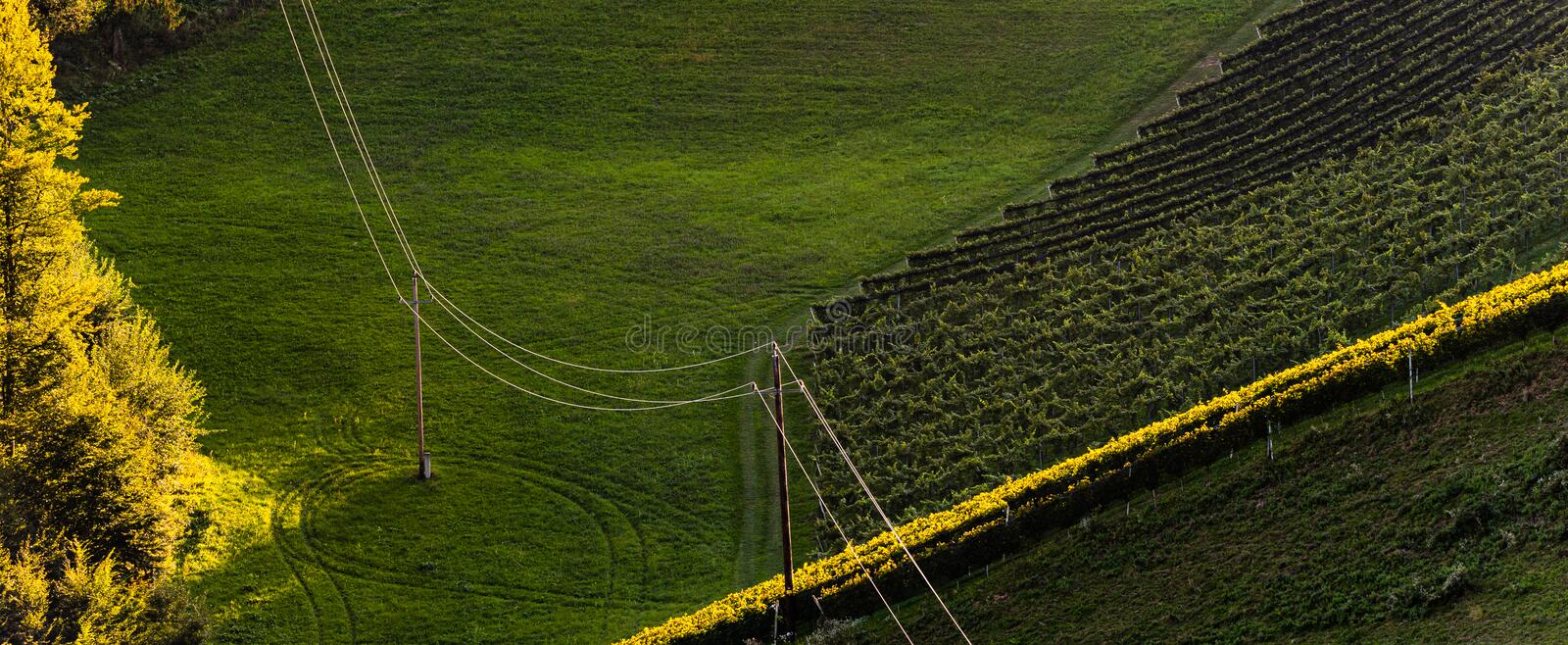 Rows Of Vineyard Grape Vines. Autumn Landscape. Austria south Styria . Abstract Background Of Autumn Vineyards Rows. stock images