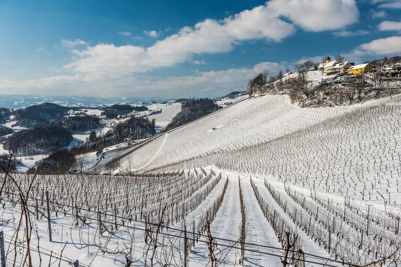 Rows of vineyards covered with white snow royalty free stock images