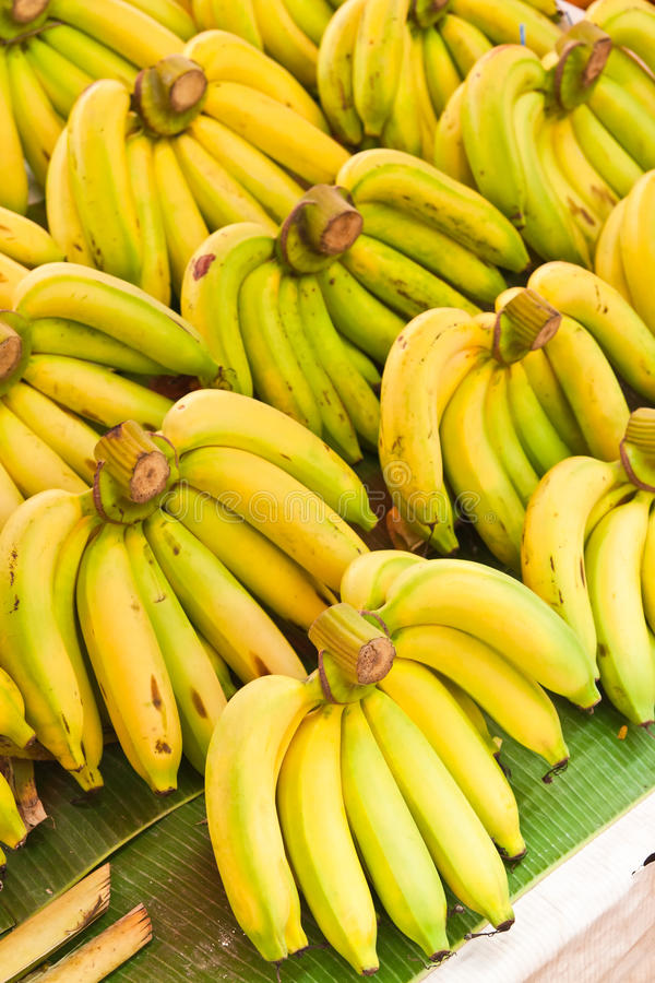 Download Rows of Yellow bananas stock photo. Image of pile, stacked - 25657832