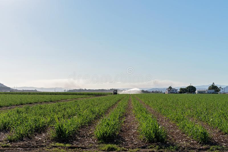 Travel Irrigation Of A Sugar Cane Paddock. Rows of young sugar cane in a field on a plantation, being watered by travel irrigation stock photography