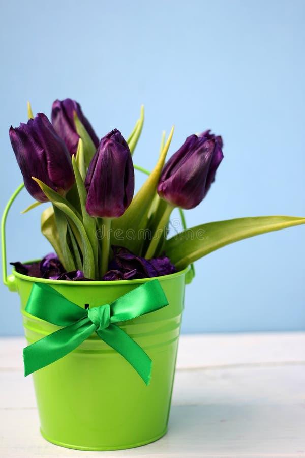 Roxo das tulipas: felicitações, o 8 de março dia internacional do ` s das mulheres, o 14 de fevereiro dia do ` s do Valentim, fer imagens de stock royalty free