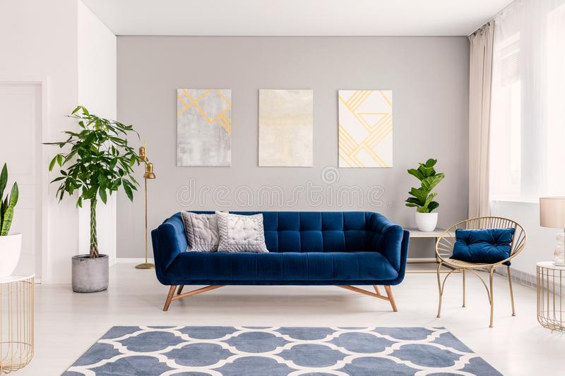 Royal blue couch with two pillows standing in real photo of bright living room interior with fresh plants, window with curtains, t. Hree paintings and carpet stock photos