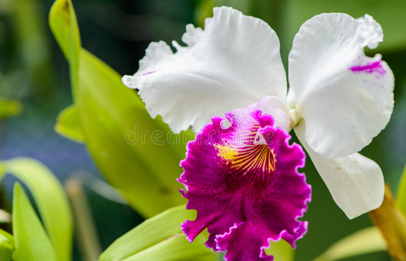 Royal Botanic Gardens. Different types of orchids royalty free stock photography