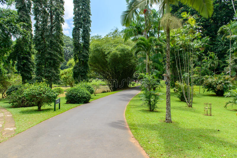 Royal Botanic Gardens. Different Types Of Trees Stock Image - Image ...