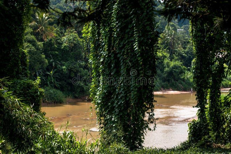 The Royal Botanic Gardens. Kandy, Sri Lanka royalty free stock photography