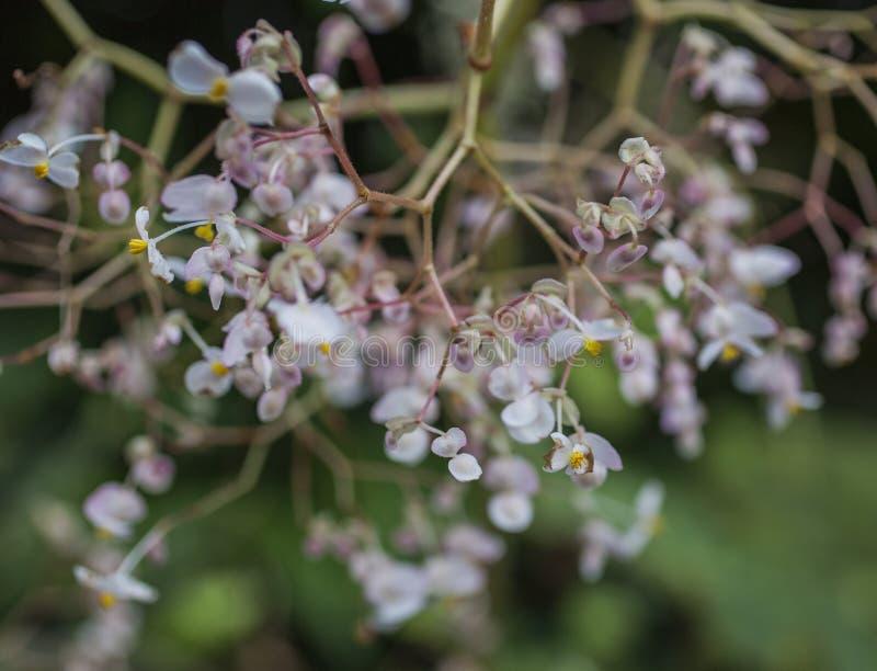 Royal Botanic Gardens, Kew, London - um monte de flores pequenas fotografia de stock