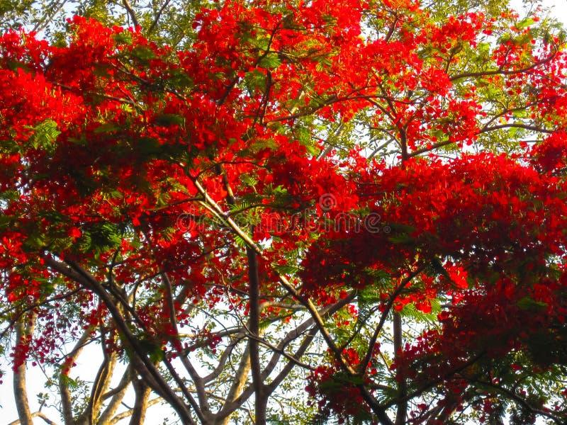 Royal Botanical garden Peradeniya. Sri Lanka royalty free stock photo