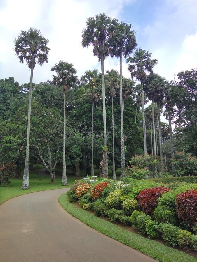Royal Botanical Gardens - Peradeniya lizenzfreie stockfotos