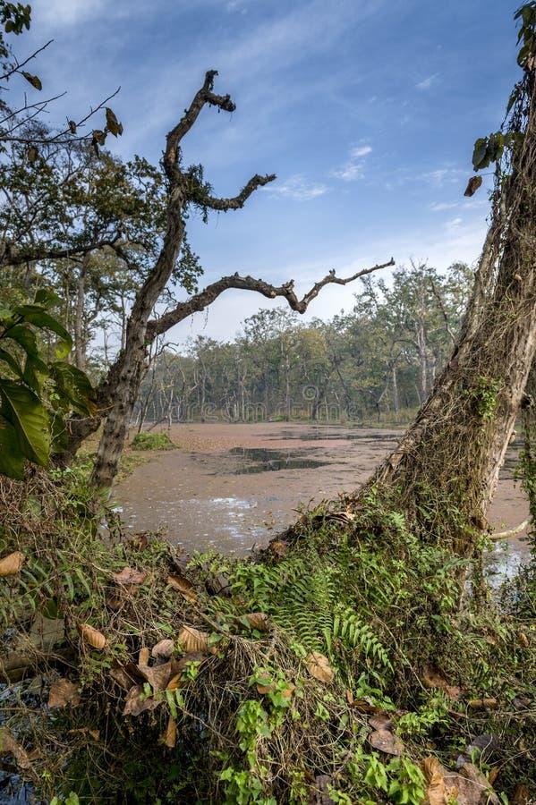 Royal Chitwan National Park, Nepal. royalty free stock photography
